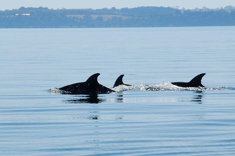 dolphin-lakes